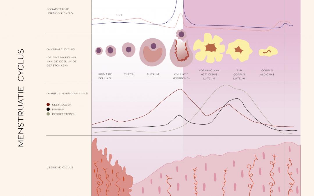 Hoe ziet een 'normale' menstruatiecyclus eruit?